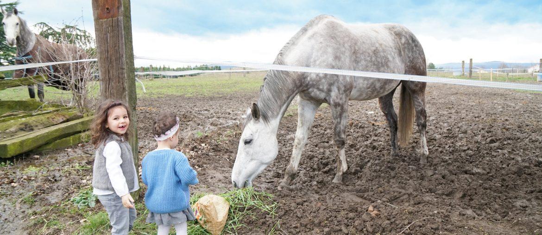 Papa absent, des sœurs vont nourrir les chevaux