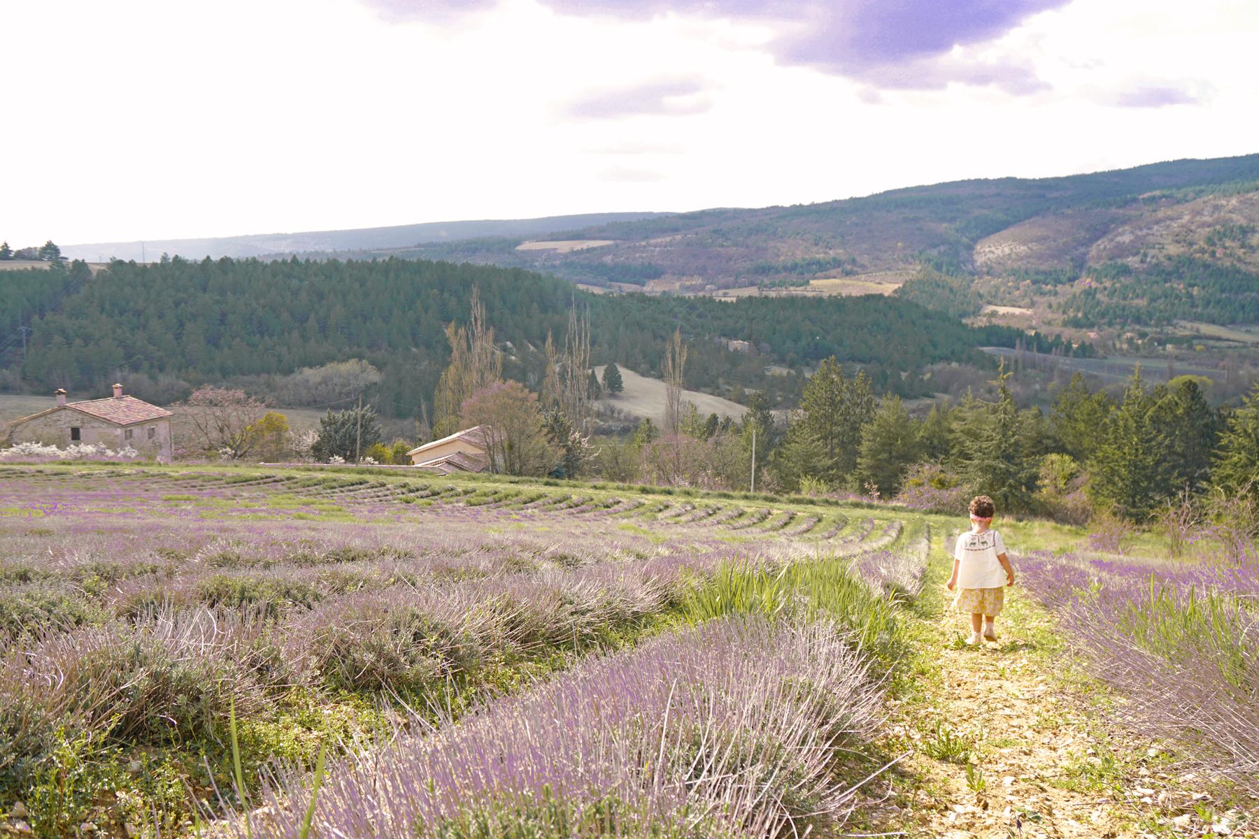 Petite fille, route des lavandes, Drôme provençale