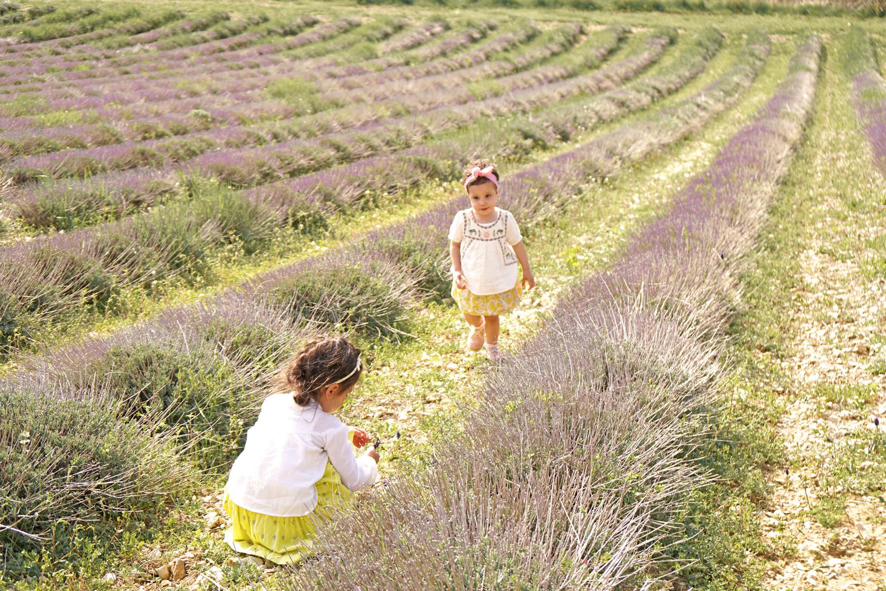 2 soeurs, route des lavandes, Drôme provençale