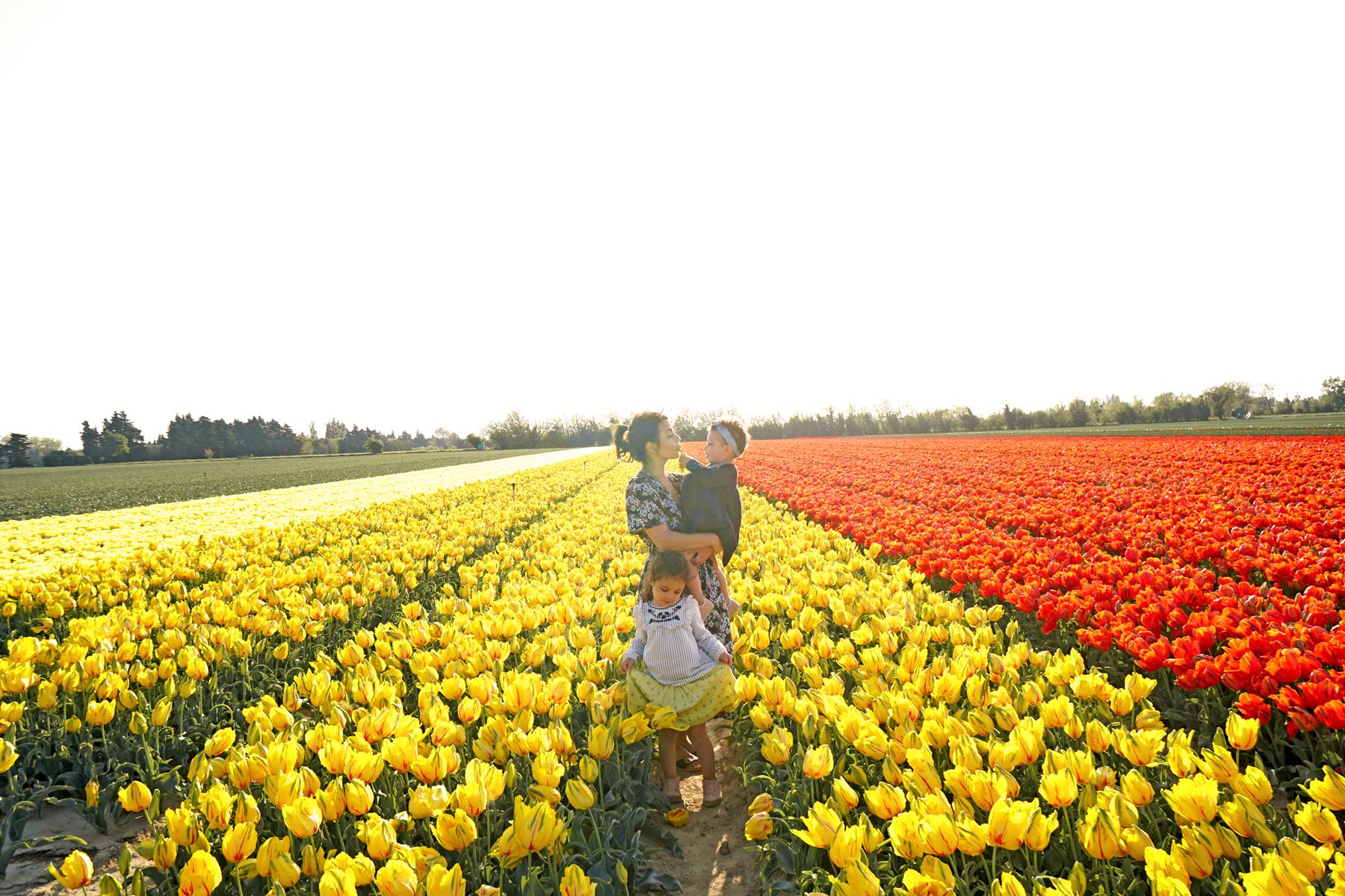 Famille dans un champs de tulipes