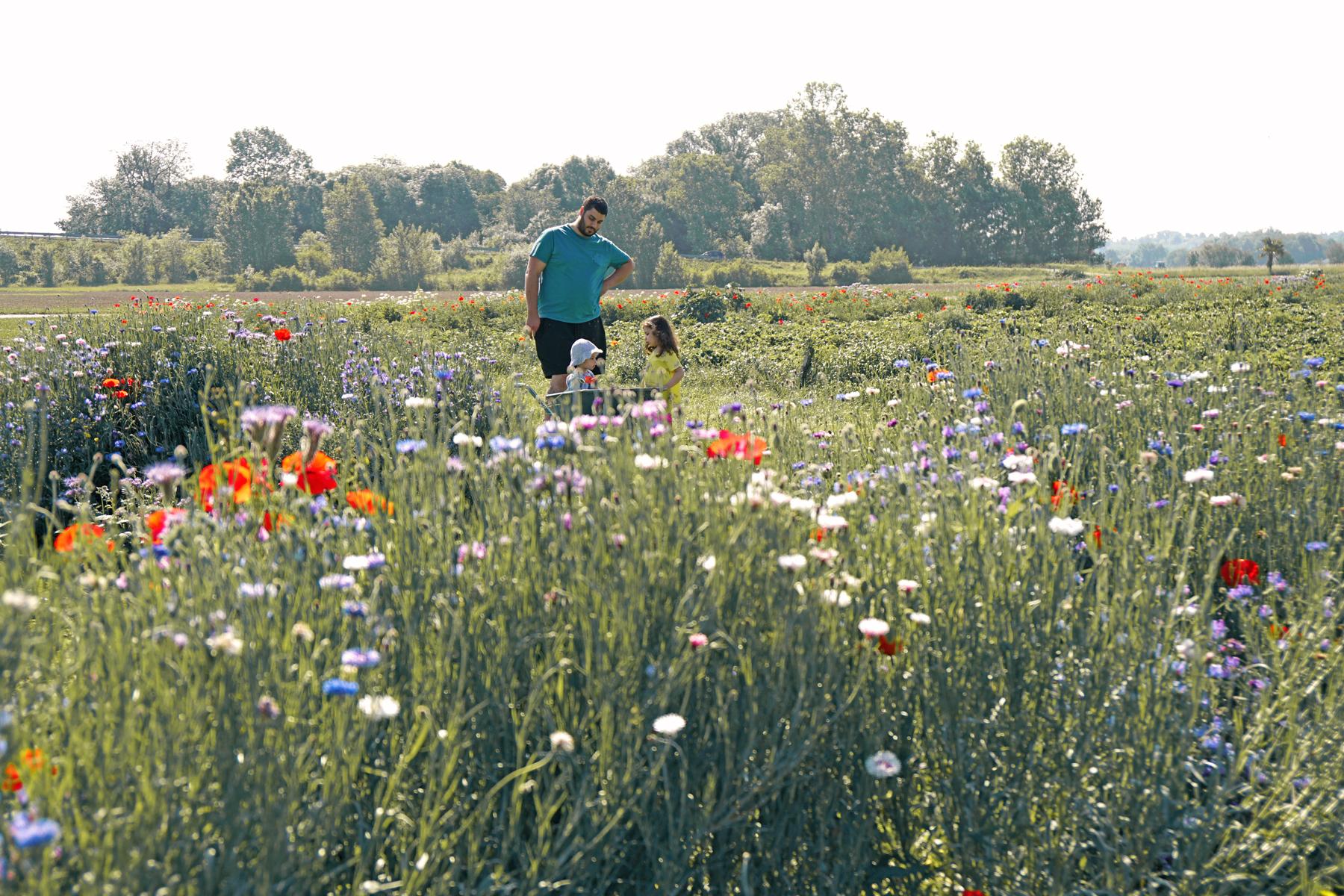 Famille dans un champs de fleurs à Fraisochamps, Thil