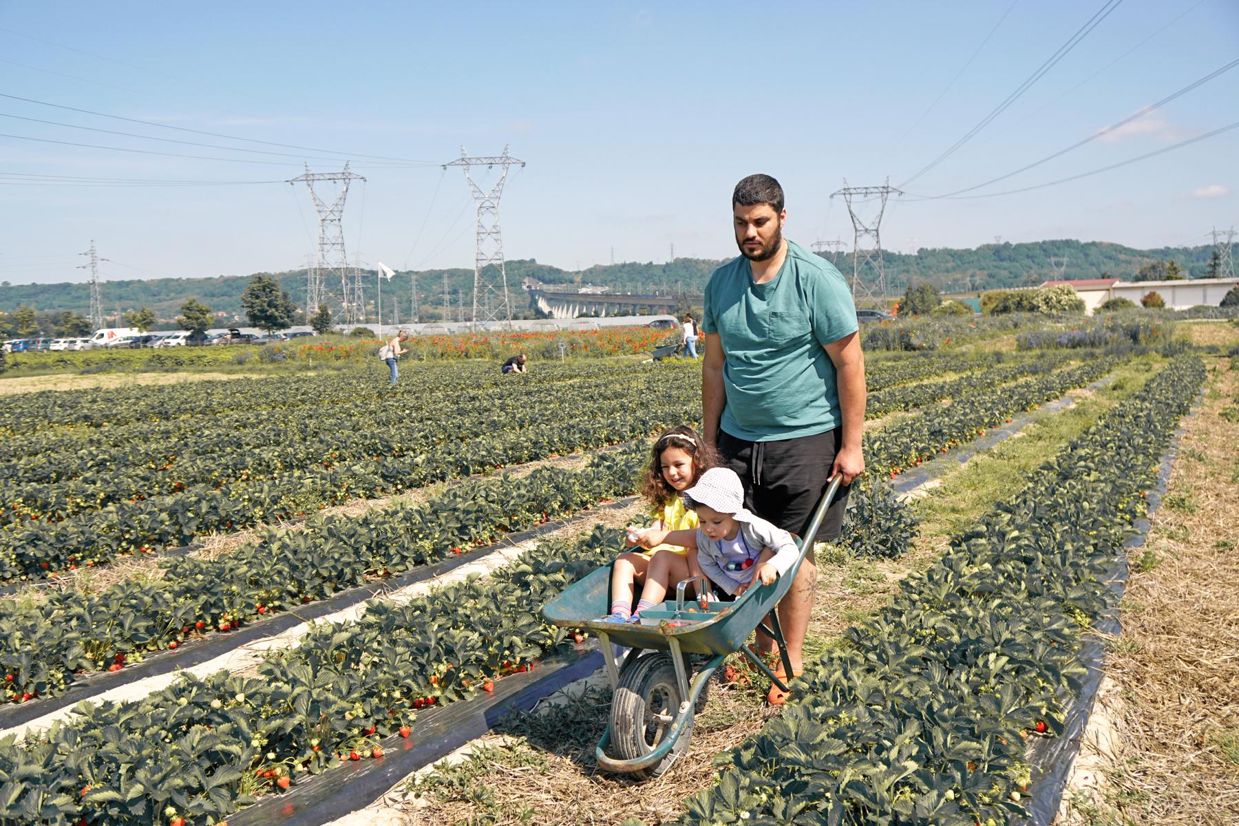 Cueillette de fraises à Fraisochamps, Thil