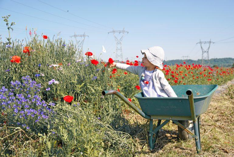 Petite fille dans un champs de fleurs à Fraisochamp, Thil