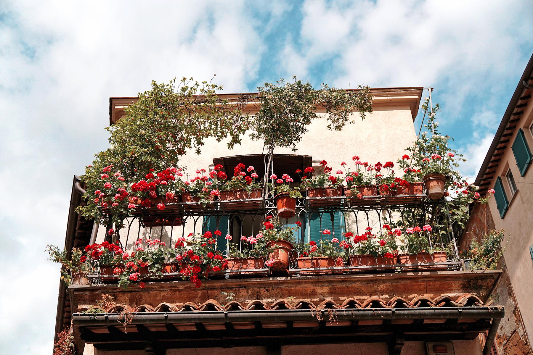 Fleurs, Orvieto Italie