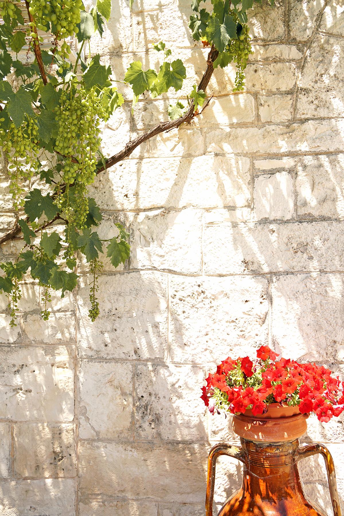 Fleurs en jarre et raisins