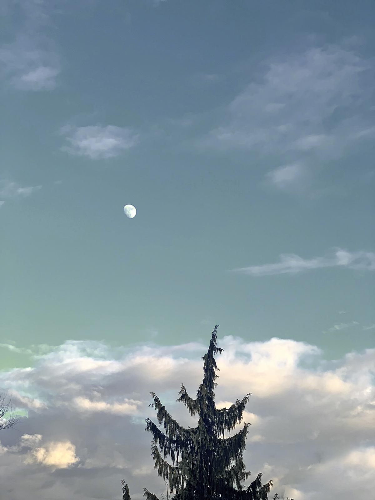 Lune en plein jour, sapin