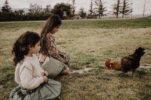 A la ferme pédagogique, les enfants nourrissent les poules